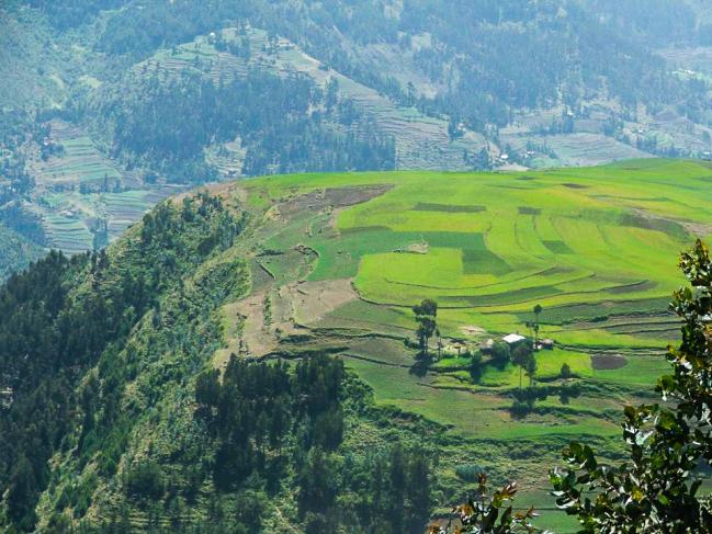 champs cultivé en Ethiopie