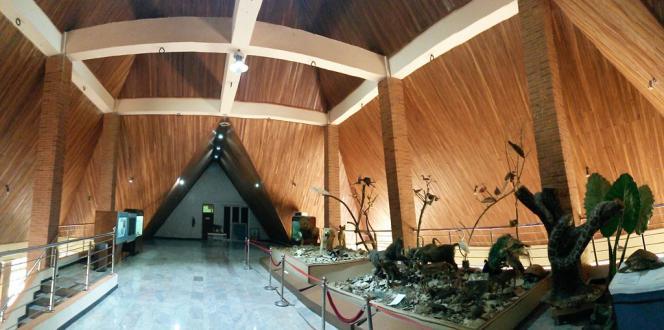 Une salle du Musée d'histoire naturelle d'Obafemi Awolowo University