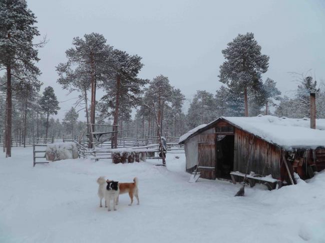 Cabane en bois avec chiens de traîneaux en Sibérie