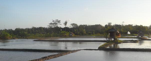 Rizière, Bali