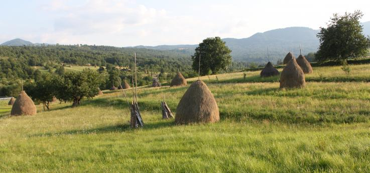 paysage du Maramures