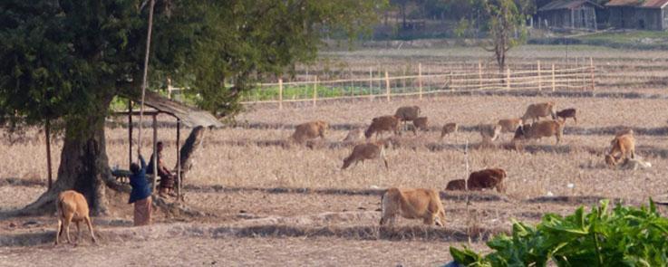 L'agro-écologie, une voie d'avenir pour le Laos ?