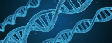 Adn, Matériel Génétique, Helix